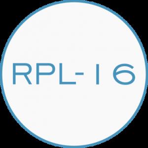 RPL16.3